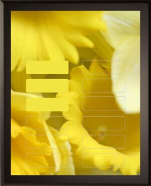 Golden Daffodil - 12 Plate Perpetual Plaque